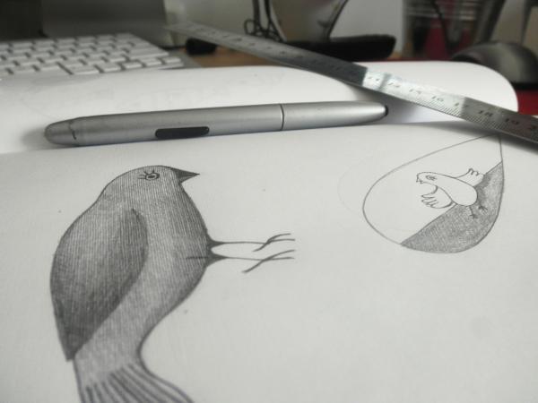 oiseau crayon1_0