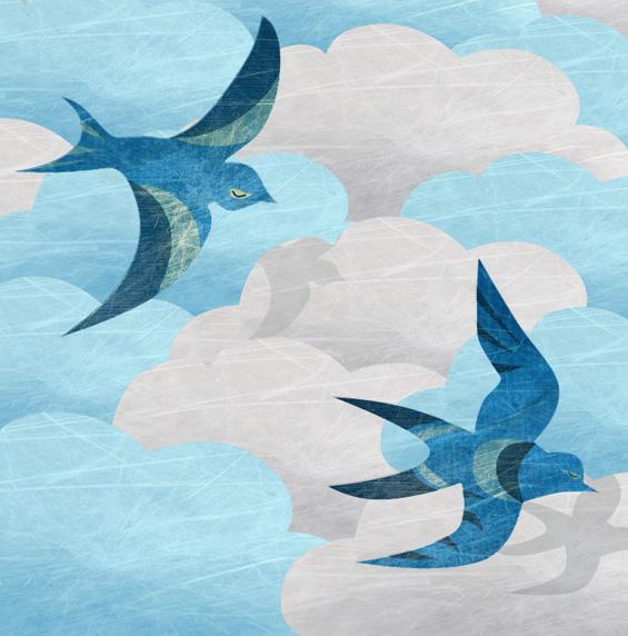 oiseau noame bleu