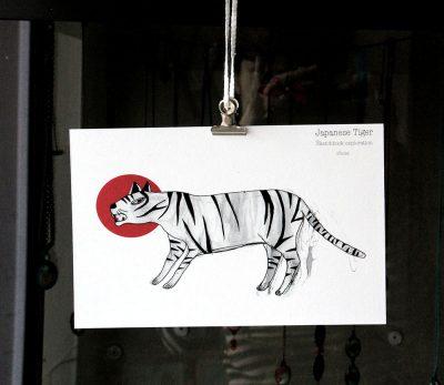 photo tigre B 3