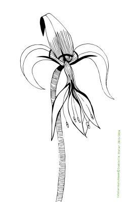 iris sketch