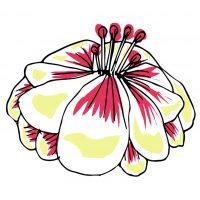feature fleur maison